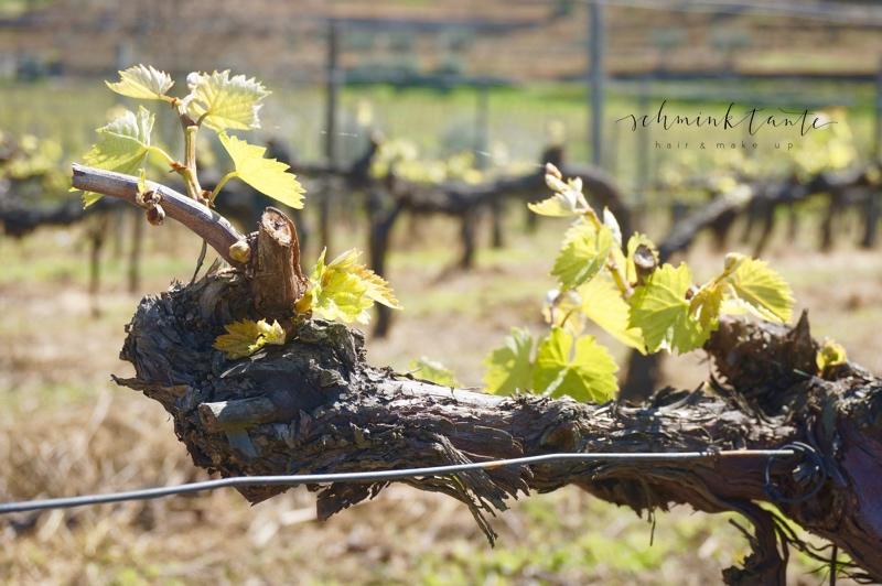 SixSenses, Wein, Weinrebe, Weinberg, Weinstock, grün, Topblog